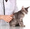 Ветеринарные клиники в Хоринске